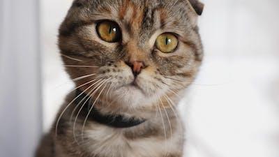 Cute Young Cat Cute Looks at the Camera