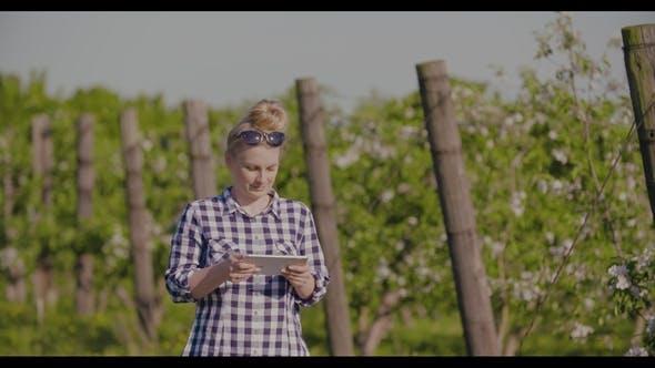Thumbnail for Farmer Examining Blossom Branch In Orchard