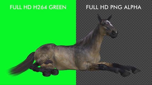 Horse - Grulla - Laying Loop