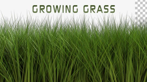 Growing Grass Light Wind