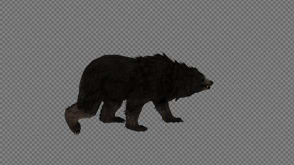 Black Bear Walk Pack 3IN1