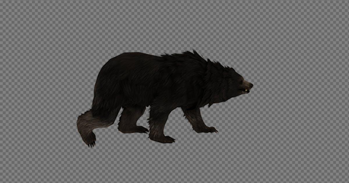 Black Bear Walk Pack 3IN1