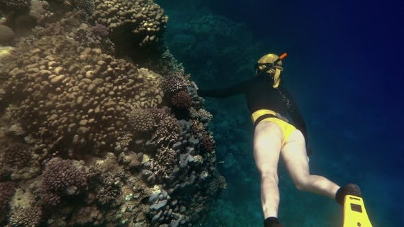 Thumbnail for Freediver Girl Diving Deep To Corals
