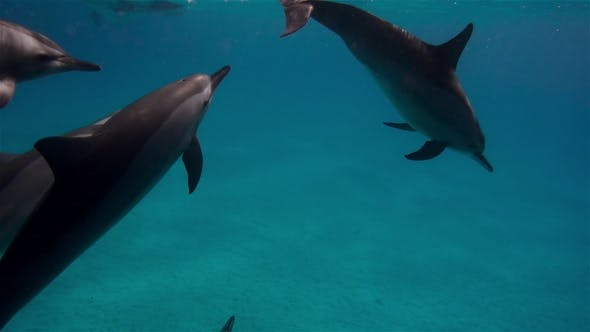 Thumbnail for Free Dolphins Swimming