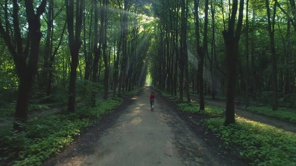 Thumbnail for Young Woman Is Jogging in Beautiful Green Alley in the Sunny Morning. Aerial View