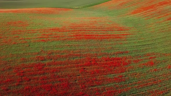 Thumbnail for Aerial View of Poppy Hills in Moravia
