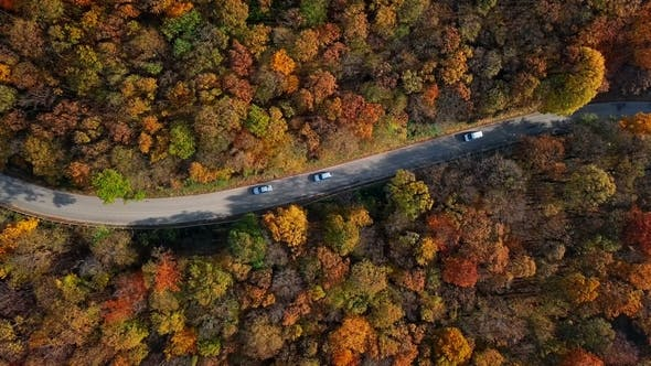 Thumbnail for Aerial of Car Driving Through Sunny Autumn Forest.