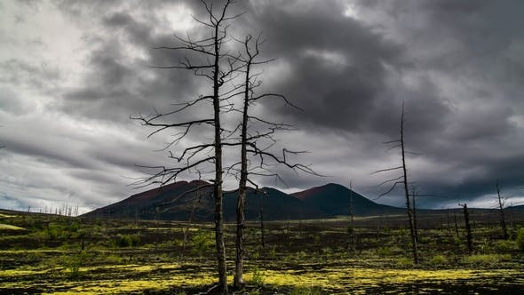 Thumbnail for Dead Trees on a Sunset Sky Background. Kamchatka