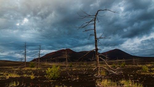 Dead Trees on a Sunset Sky Background Kamchatka