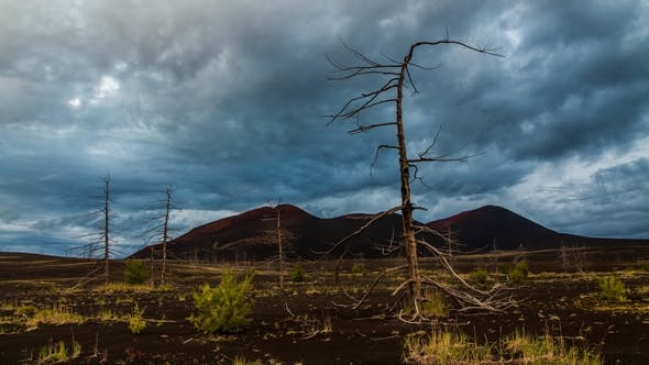 Thumbnail for Dead Trees on a Sunset Sky Background Kamchatka