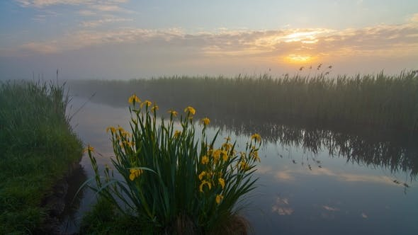 Thumbnail for Misty Dawn on the River Bank with Beautiful Flowers
