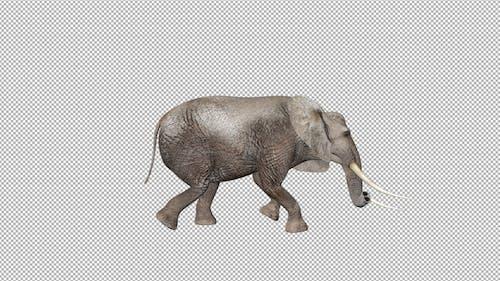 Elephant Walk Attack