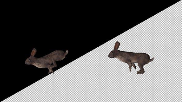 Thumbnail for Wild Rabbit Run