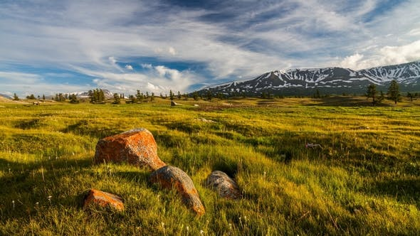 Thumbnail for Sunset in the Mountains of Altai, Mongolia. Meadow with Edelweisses