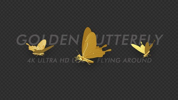 Thumbnail for Butterfly - Golden - Flying Around - 4K