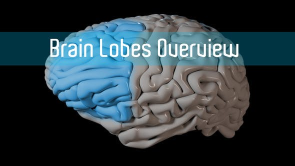 Thumbnail for Brain Lobes Overview