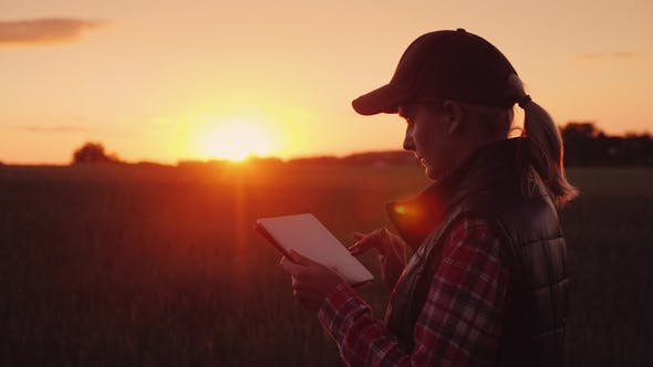 Thumbnail for A Female Farmer Is Working in the Field at Sunset, Enjoying a Tablet. Technologies in Agrobusiness