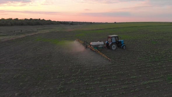 Thumbnail for Aerial View of an Irrigated Field Tractor with Fresh, Young Potatoes at Sunset.