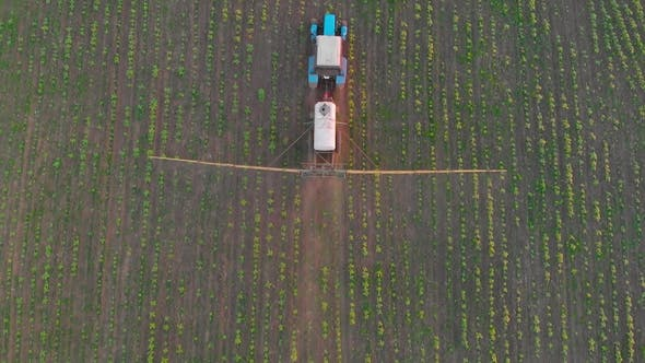 Aerial View of an Irrigated Field Tractor with Fresh, Young Potatoes at Sunset