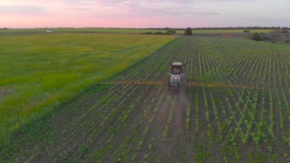 Thumbnail for Aerial View of an Irrigated Field Tractor with Fresh, Young Potatoes at Sunset
