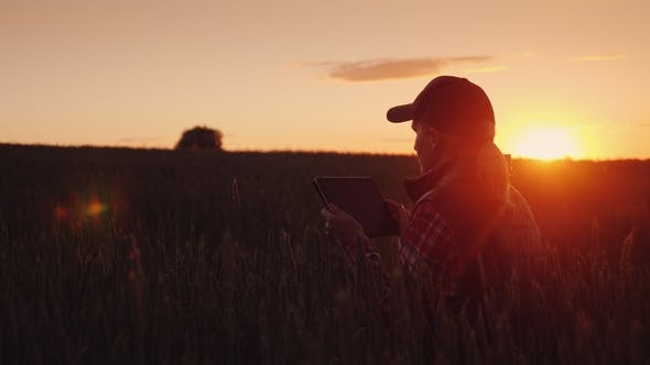 Cover Image for A Woman Farmer Works in the Evening in a Field of Wheat. Beautiful Sunset, Enjoys a Tablet