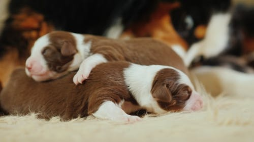 A  of a Dog That Lick Its Newborn Pups. Care for the Offspring