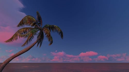 Sunrise Over and Palm Trees Tropical Sea