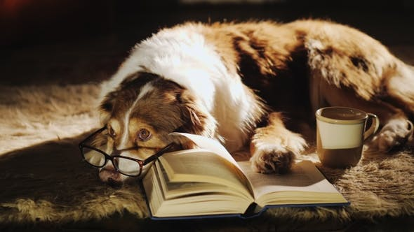 Cover Image for A Dog in Glasses Is Dozing Near an Open Book. Nearby Is a Cup of Tea. Warmth and Comfort in the