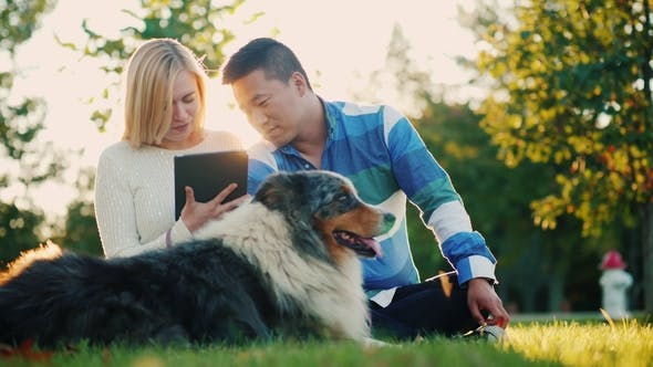 Thumbnail for A Young Couple Is Resting in the Park with a Dog, Enjoying a Tablet. Beautiful Sunset