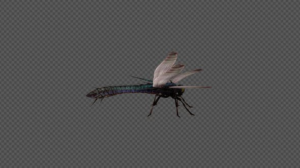 Dragonfly Idle Pack 4In1