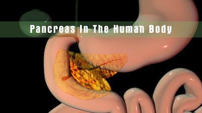 Pancreas In The Human Body