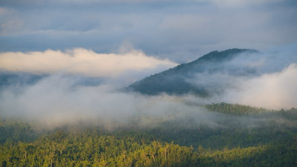 Cover Image for Fog Moving Above Forest