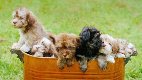 Thumbnail for Little Defenseless Puppies Are Sitting in a Large Bucket. Buy Yourself a Pet Concept