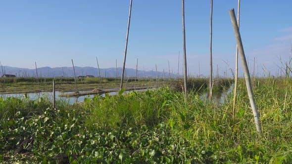 Thumbnail for Floating Gardens on Inle Lake, Myanmar (Burma)