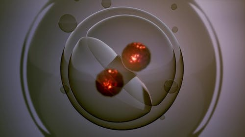 Rotate Cell Division