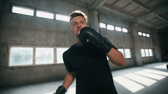 Thumbnail for Boxer at the Training
