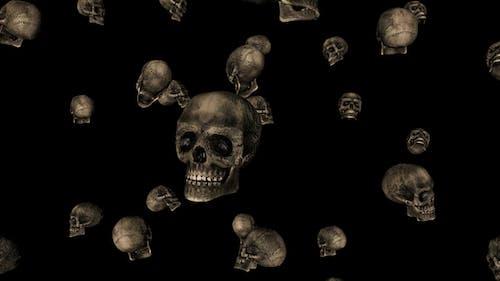 Skulls Rain