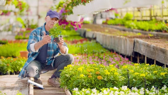 Cover Image for Researcher Examining Potted Plant At Greenhouse