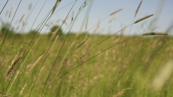 Thumbnail for Meadow of Grass