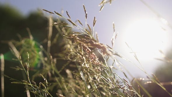 Thumbnail for Sunlight Over Meadow