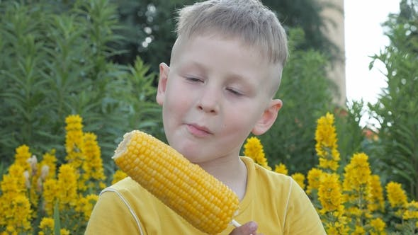 Thumbnail for Boy Is Eating Corn Cobs. Child in a Yellow T-shirt on a Background of Yellow Flowers with an