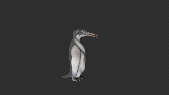 pingouin mordre et câlin et manger 6 en 1