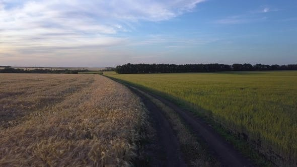 Cover Image for Road Between Fields