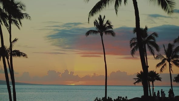 the Groupe of People Enjoying the Sunset on the Ocean Shore Among Palm Trees of Resort Hyatt on Maui