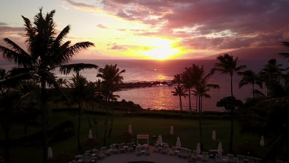 Thumbnail for Tropical Palm Trees on the Ocean Shore at Sunset on Maui,hawaii