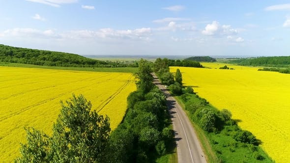 Thumbnail for Aerial View of a Field of Rapeseed with Beautiful Cloud. Green Energy
