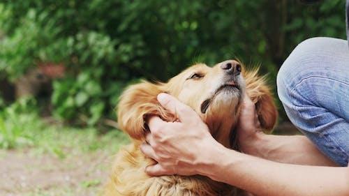 Freundschaft zwischen Menschen und Haustieren