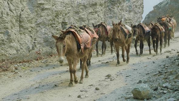 Thumbnail for Donkeys Carry a Large Load on Nepalese Alpine Path.