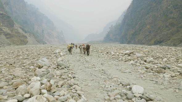 Thumbnail for Backpackers with Guide Walk on the Manaslu Mountain Circuit Trek in Nepal.
