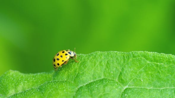 Cover Image for Ladybug in the Grass